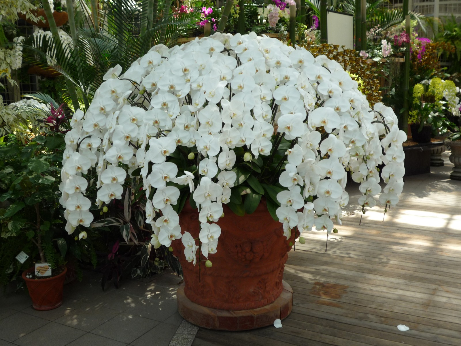 Au japon il y a des orchid es n 39 haazblog for Plante japonaise pour jardin