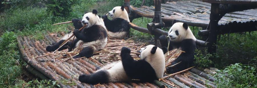 Chengdu – 20 septembre 2013