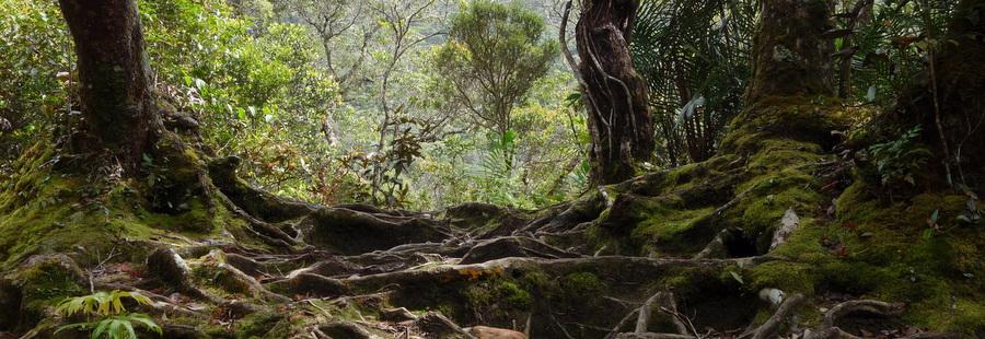 Mont Kinabalu – 13 au 14 octobre 2013
