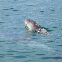 Bébé dauphin !