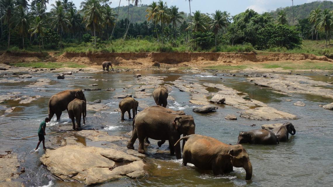 De Kandy à Colombo – 20 février 2016