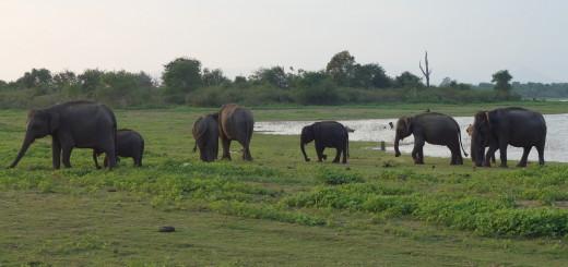 2016 - 03 - 02 - Sri Lanka (Uda Walawe)