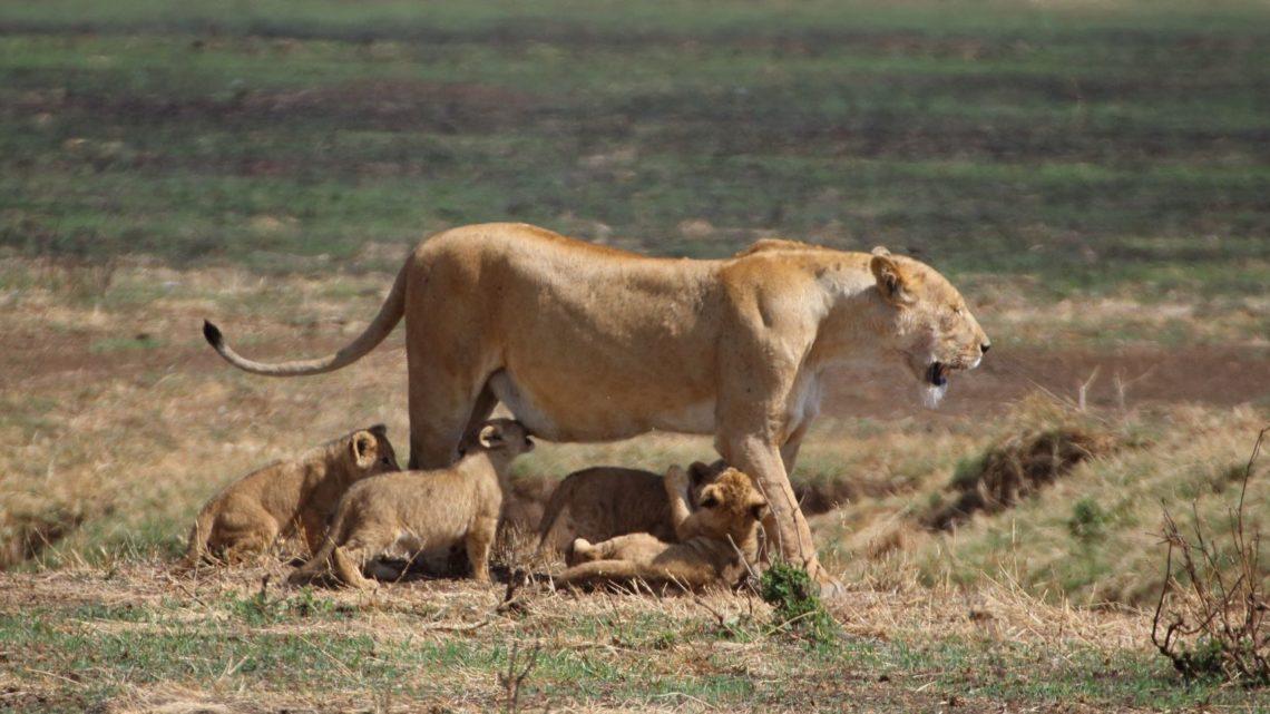 De Arusha à Ngorongoro – 21 et 22 novembre 2016